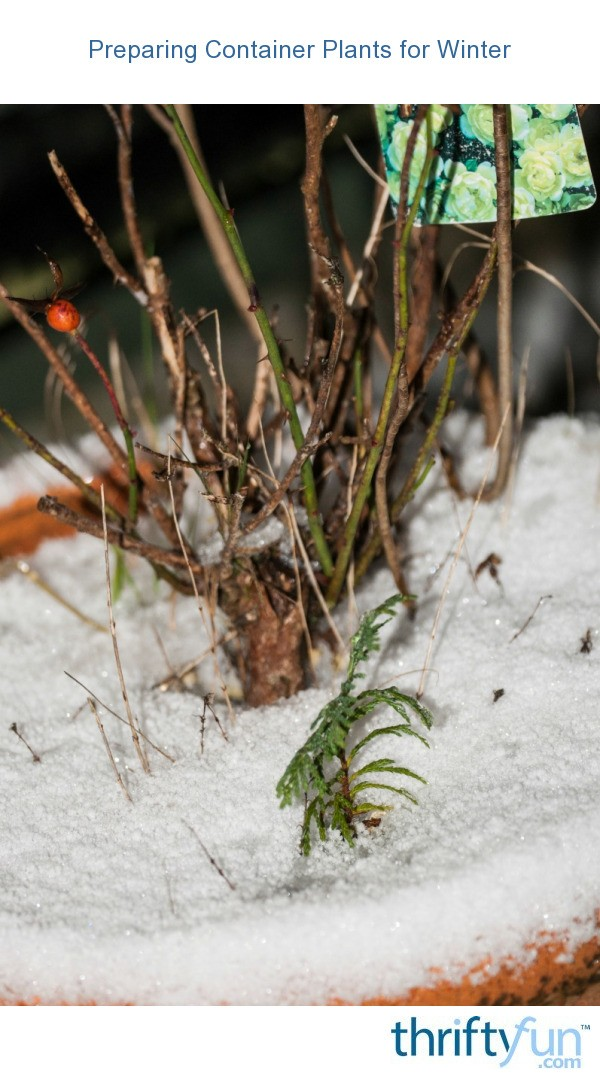 Preparing Container Plants for Winter  ThriftyFun