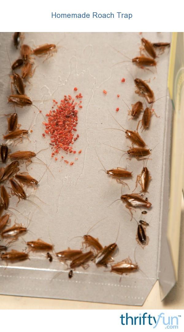 Making a Homemade Roach Trap  ThriftyFun