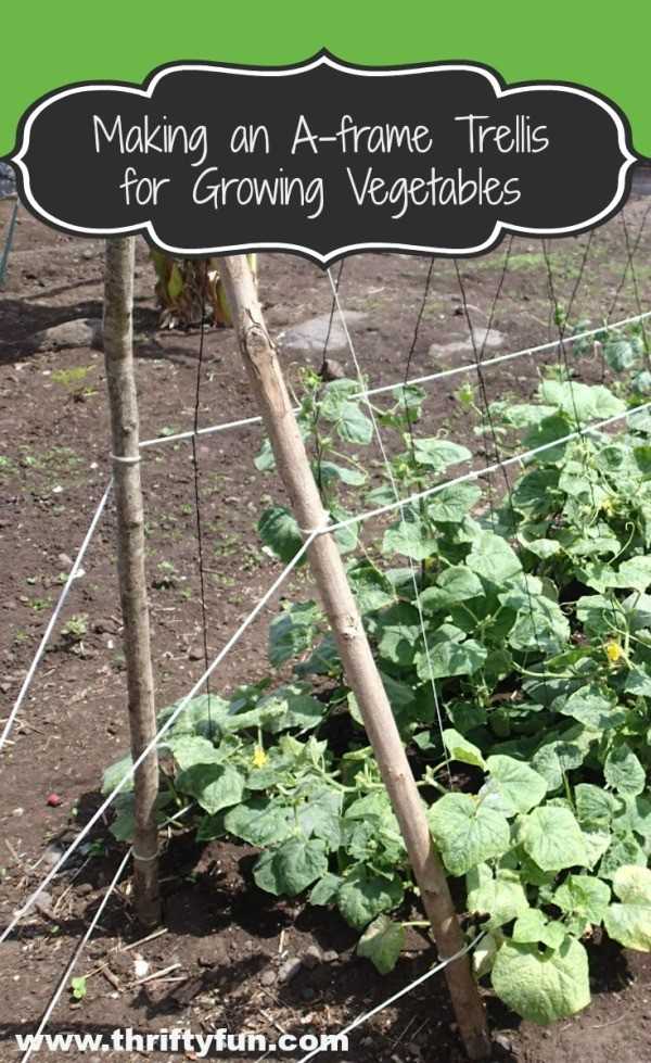 Making An A Frame Trellis For Growing Vegetables Thriftyfun