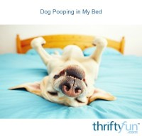 Dog Pooping in My Bed | ThriftyFun