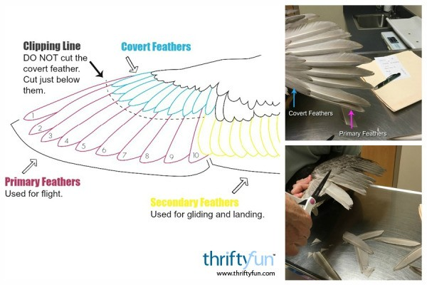 duck wing diagram intertherm heat pump wiring clipping a s wings thriftyfun