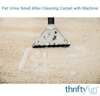 Pet Urine Smell After Using a Carpet Cleaning Machine ...
