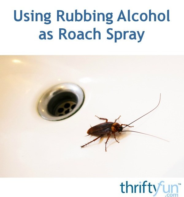Aerosol Ant And Roach Killer