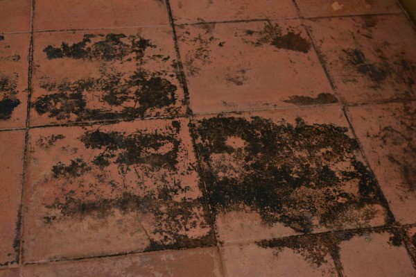 Can Mold Grow Under Laminate Flooring on a Concrete Foundation  ThriftyFun