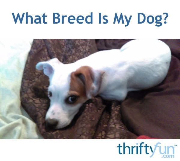 What Breed Is My Dog? | ThriftyFun