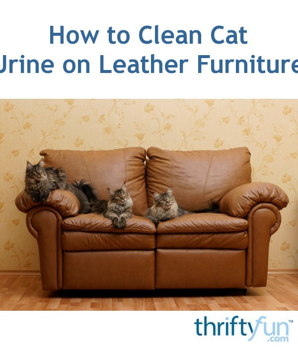 cat urine on leather sofa condo size sleeper how to clean furniture thriftyfun