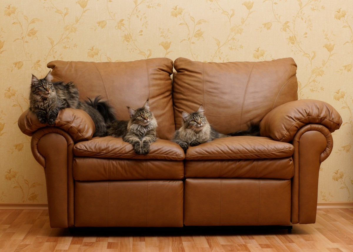 cat urine on leather sofa maverick reclina way full reclining how to clean furniture thriftyfun a couch