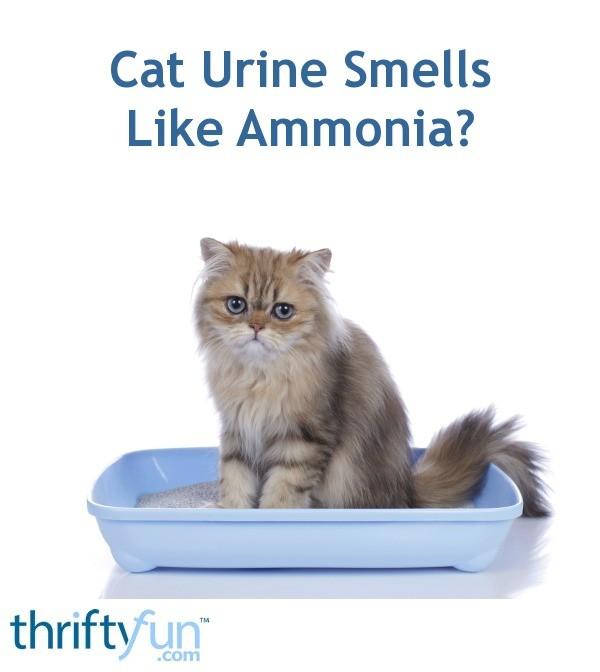 Cat Urine Smells Like Ammonia? | ThriftyFun