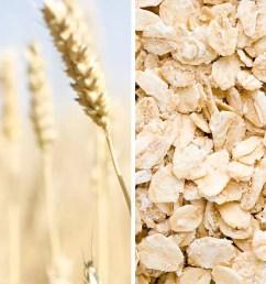 oat grain [ 1200 x 700 Pixel ]