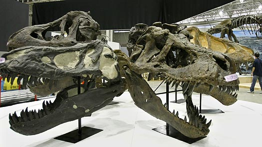 Extinction Gene: Why Some Species Are More at Risk