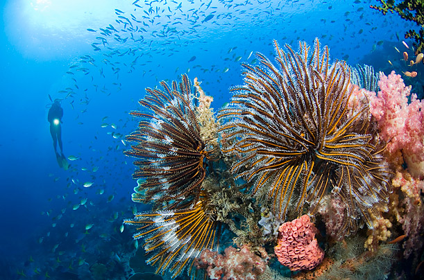 The Otherworldy Flora and Fauna of the Coral Triangle