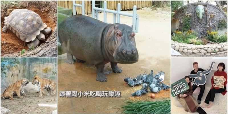新竹市動物園最新搶先看報導!河馬樂樂鴿子餵食秀.孟加拉虎.馬來熊來跟大家見面!動物園開放相關資訊懶人包
