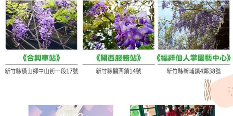 2020新竹春節連假。紫藤花開相關活動整理