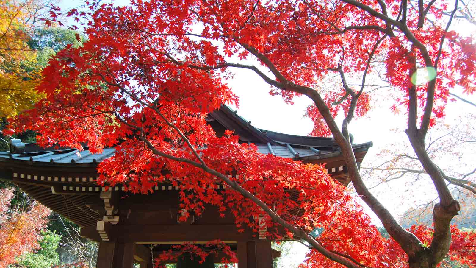Late Fall Desktop Wallpaper Autumn Colors In Kamakura 8 Classic Temples With