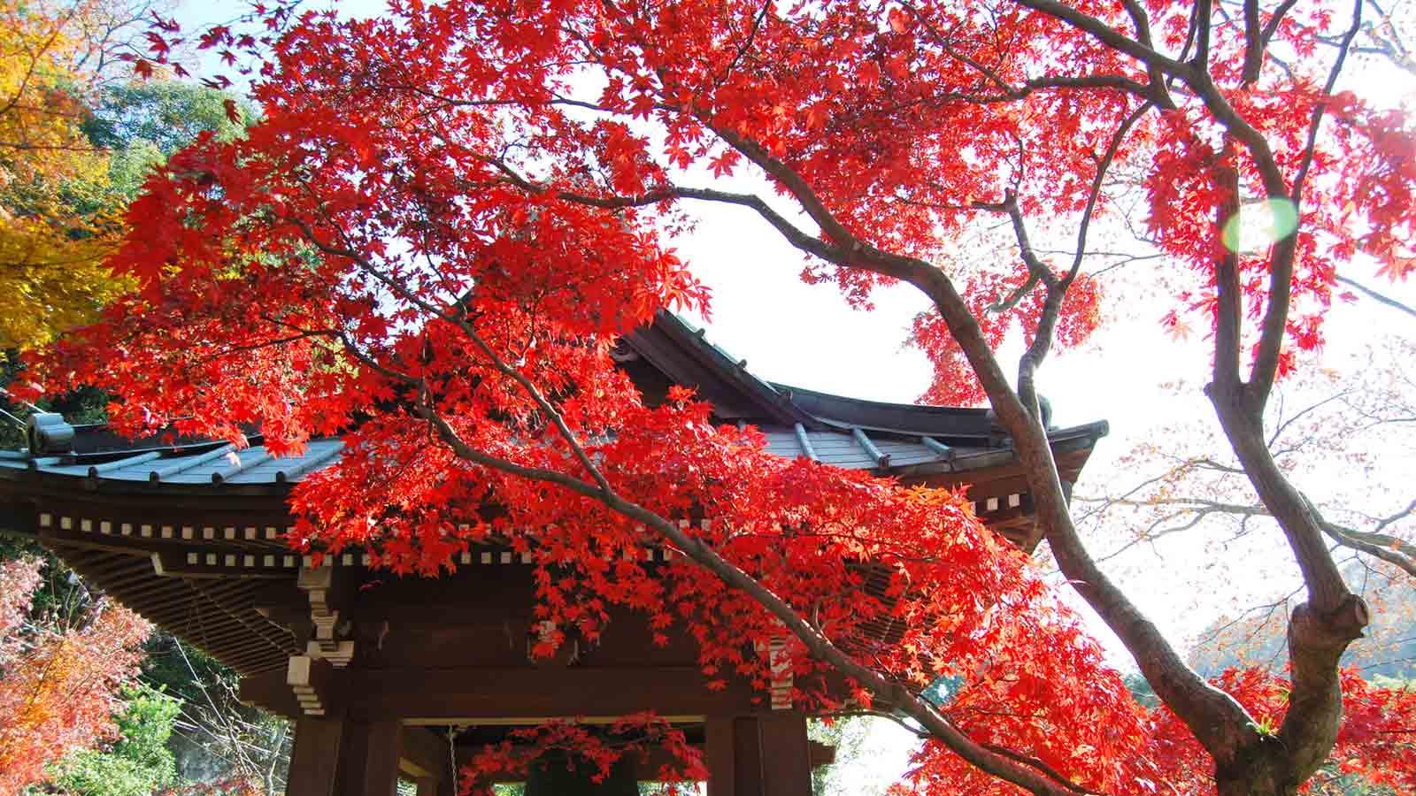 Wallpaper Fall Farmhouse 【红叶】武家古都镰仓的寺院神社