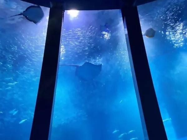 桃園Xpark水族館的日本原版橫濱八景島海島樂園玩樂全攻略,親子同遊的最佳選擇!@Rucola (89680)