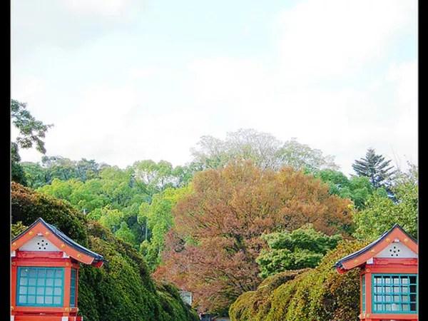 [京都] 秋, 遊客可充分享受池邊散步的樂趣 . 池邊也種植整排杜鵑,長岡天滿宮。 此地一樣還有一些楓葉,但是遊客不多,境內又頗寬廣,從杜鵑隧道伸展至水池的另一端,散步起來更覺得閒散愜意。中堤兩側種的是據說樹齡有一百幾十年的杜鵑花樹,長岡天滿宮@咖米的小旅行 (14115) - 旅行酒吧