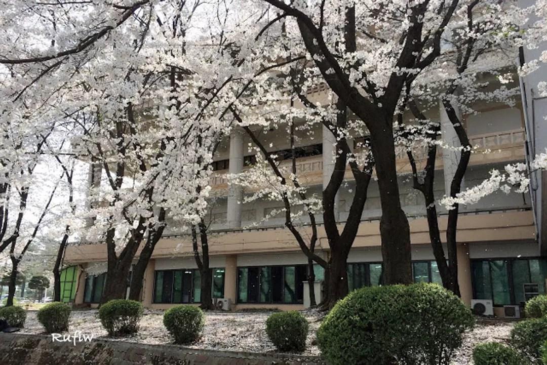 首爾兒童大公園 서울어린이대공원@Rufiw (11264) - 旅行酒吧