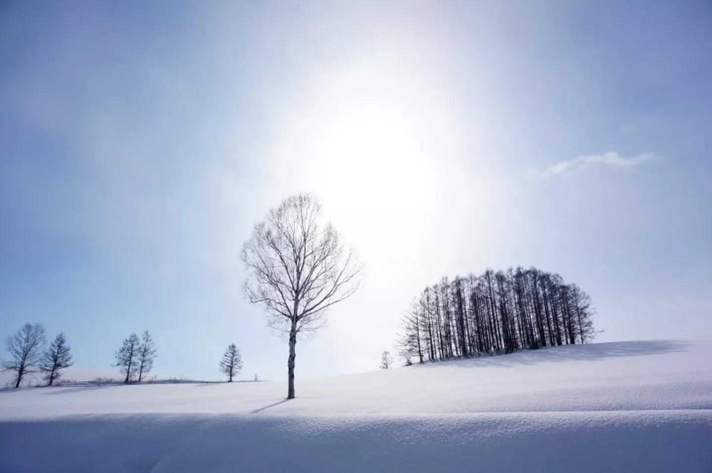 [冬 北海道] 二訪 冬日美瑛 夢幻雪色@Annie 安妮 (9718) - 旅行酒吧