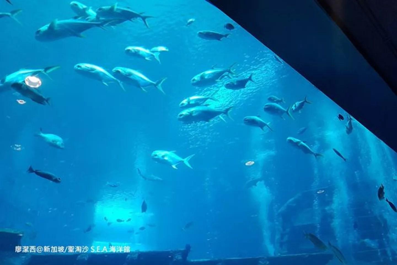 帶孩子去玩新加坡18【新加坡/聖淘沙】S.E.A.海洋館(S.E.A. Aquarium)@潔西貝比的生活小事 (86611) - 旅行酒吧
