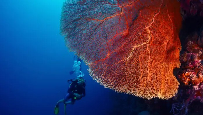 Scuba Diving In Bali Top 7 Dive Sites For Diving In 2021