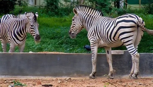 5 Zoos In Kerala To Witness The Spectacular Wildlife Down South