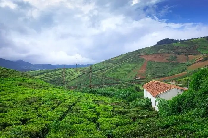 best honeymoon destination in South India is Coorg