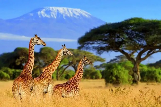 Best Safari In South Africa: Into 15 African Wildest Corners