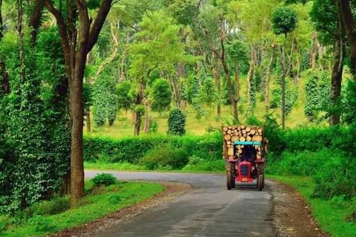 Image result for Coorg, Karnataka