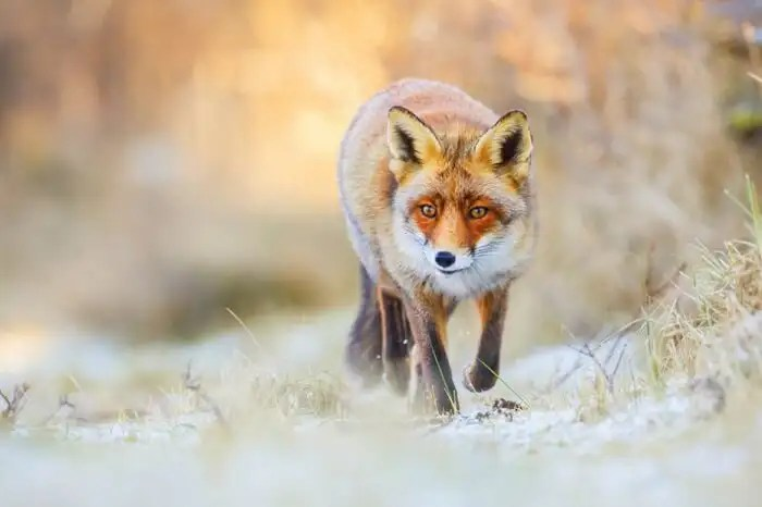 wildlife in switzerland explore