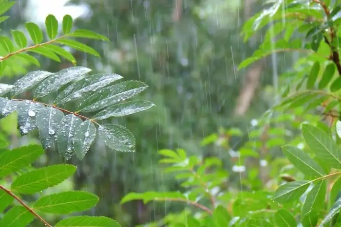 Highest Rainfall In India Best 7 Wettest Places To Explore In 2020