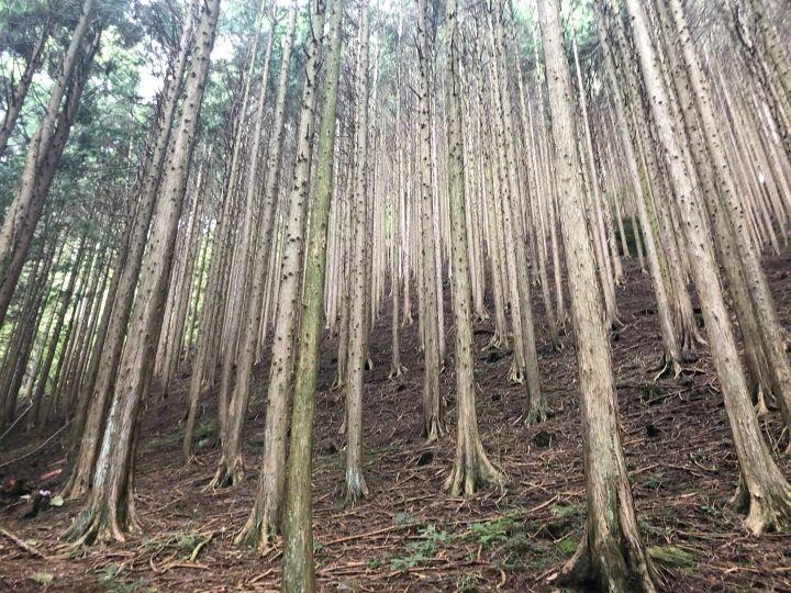 生日願望之攻頂富士山:富士山朝霧高原的『滑翔傘』初體驗 – Triplisher Stories