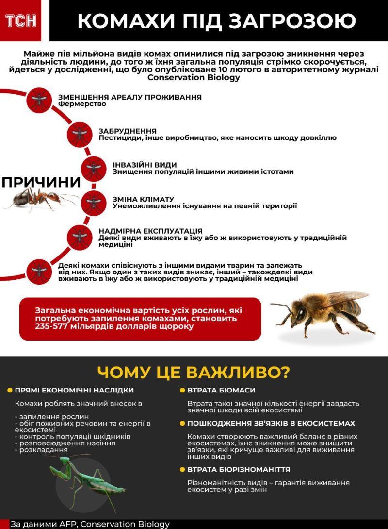 У світі зникають комахи, чим це загрожує людству