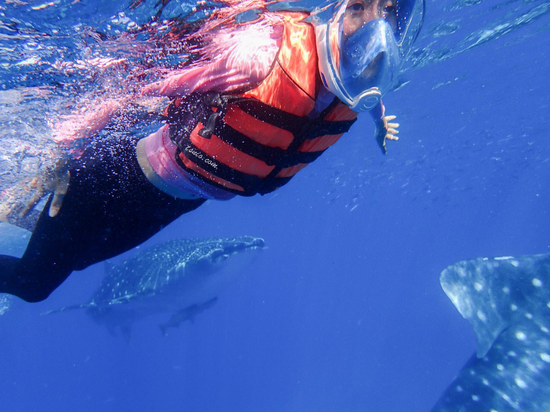 菲律賓宿霧 歐斯陸 Oslob 鯨鯊村浮潛 鯨鯊共游 - 蔡小妞依玲