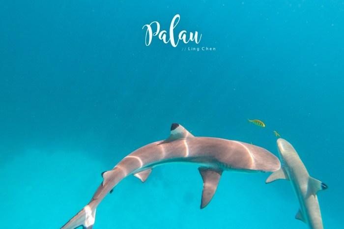 帛琉景點 鯊魚城 Shark City 鯊魚島 Ngermeaus 與鯊共泳的心驚時刻