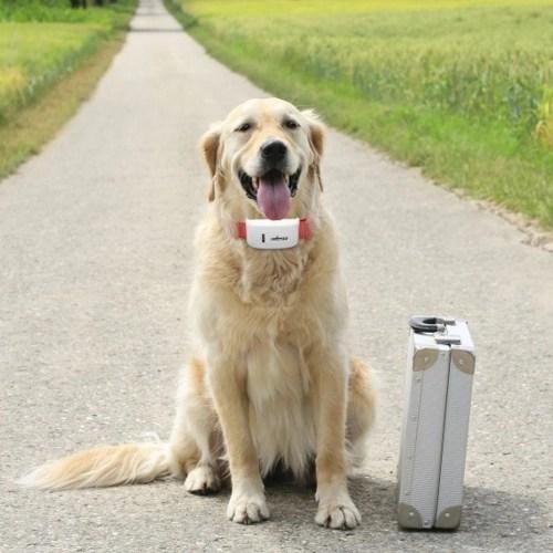 TK909 Mini Global Locator Real Time Pet GPS Locators for Pet Dog and Cat GPS Collar Satellite Tracking
