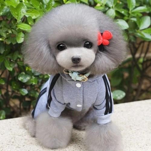 Winter Warm Pet Dog Clothes