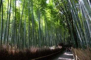 [旅遊] 京都第三天:嵐山+金閣寺+京都御苑