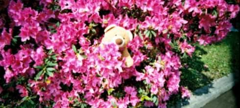 底片的夢---(V6) 繁花之春