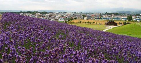 [旅遊] 北海道第三天:美瑛+富良野(在日本租機車)