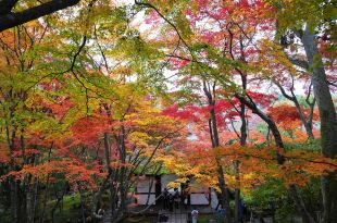 [自助旅行] 京都賞楓,嵐山常寂光寺,嵐山雞蛋拌飯