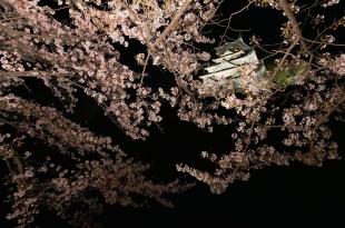 [自助旅行] 大阪自助旅行,大阪城夜櫻(西之丸夜櫻)