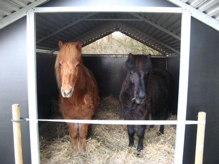 Paarden En Pony Stallen te Koop Aangeboden op Tweedehandsnet