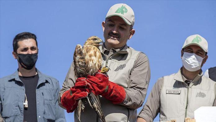 Bakan Pakdemirli: 2012'den bu yana 30 bin yaban hayvanı rehabilite edilerek doğaya bırakıldı