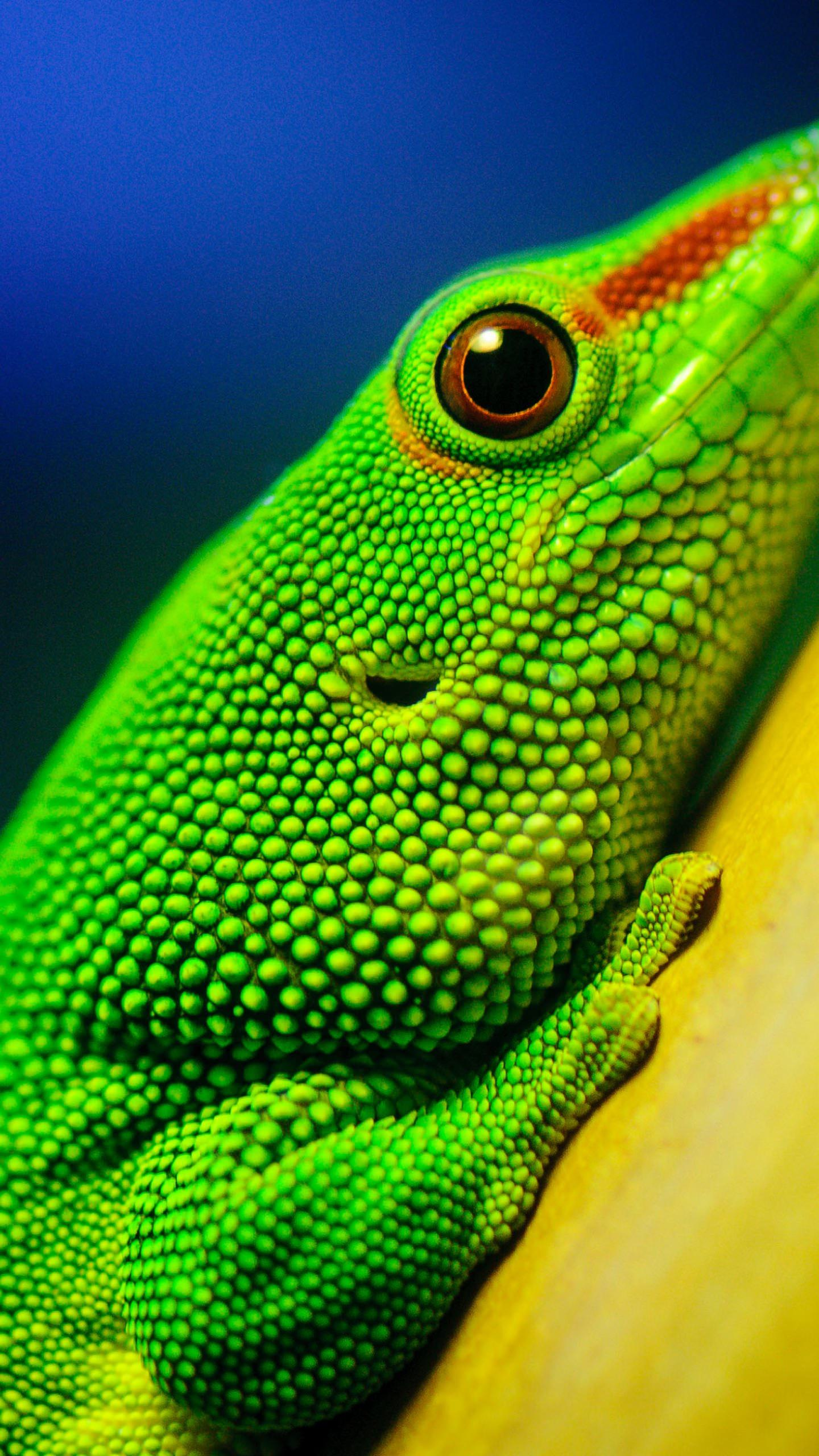 Iphone X Live Wallpaper For Android Animal Green Lizard Wallpaper Sc Smartphone