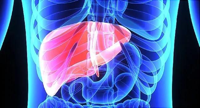 liver illustration