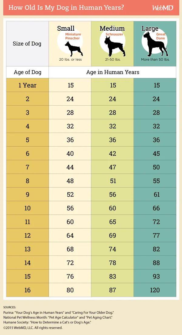 large breed dog age calculator