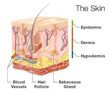 Fact Or Fiction Let Your Skin Breathe Understanding Acne Loretta K