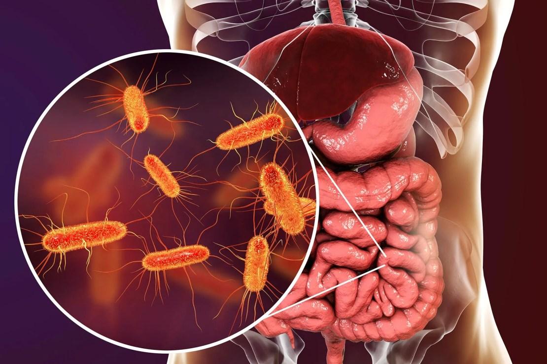 photo of gut bacteria
