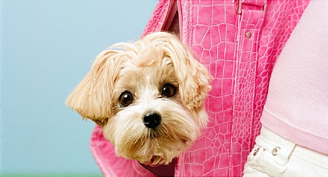 dog breed pictures the
